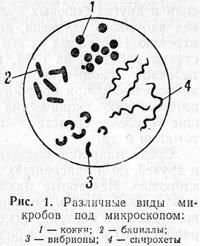 http://www.vrazvedka.ru/main/learning/vopros-ob/im/rusanov-01.jpg