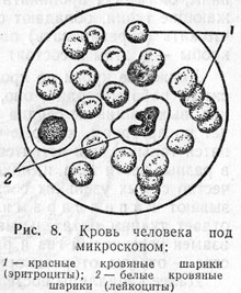 http://www.vrazvedka.ru/main/learning/vopros-ob/im/rusanov-08.jpg
